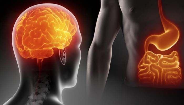 intestino secondo cervello